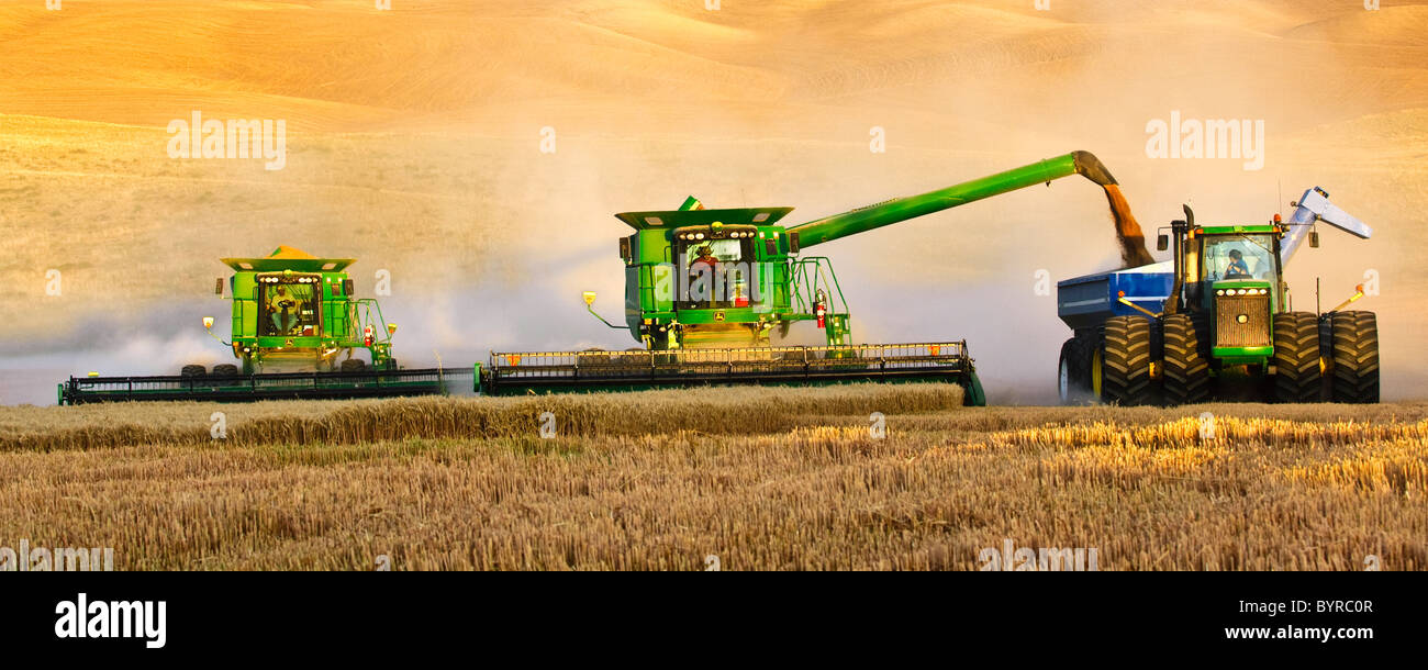 "Two John Deere combines in tandem harvest wheat in late afternoon light while one unloads into a grain cart ""on - Stock Image"