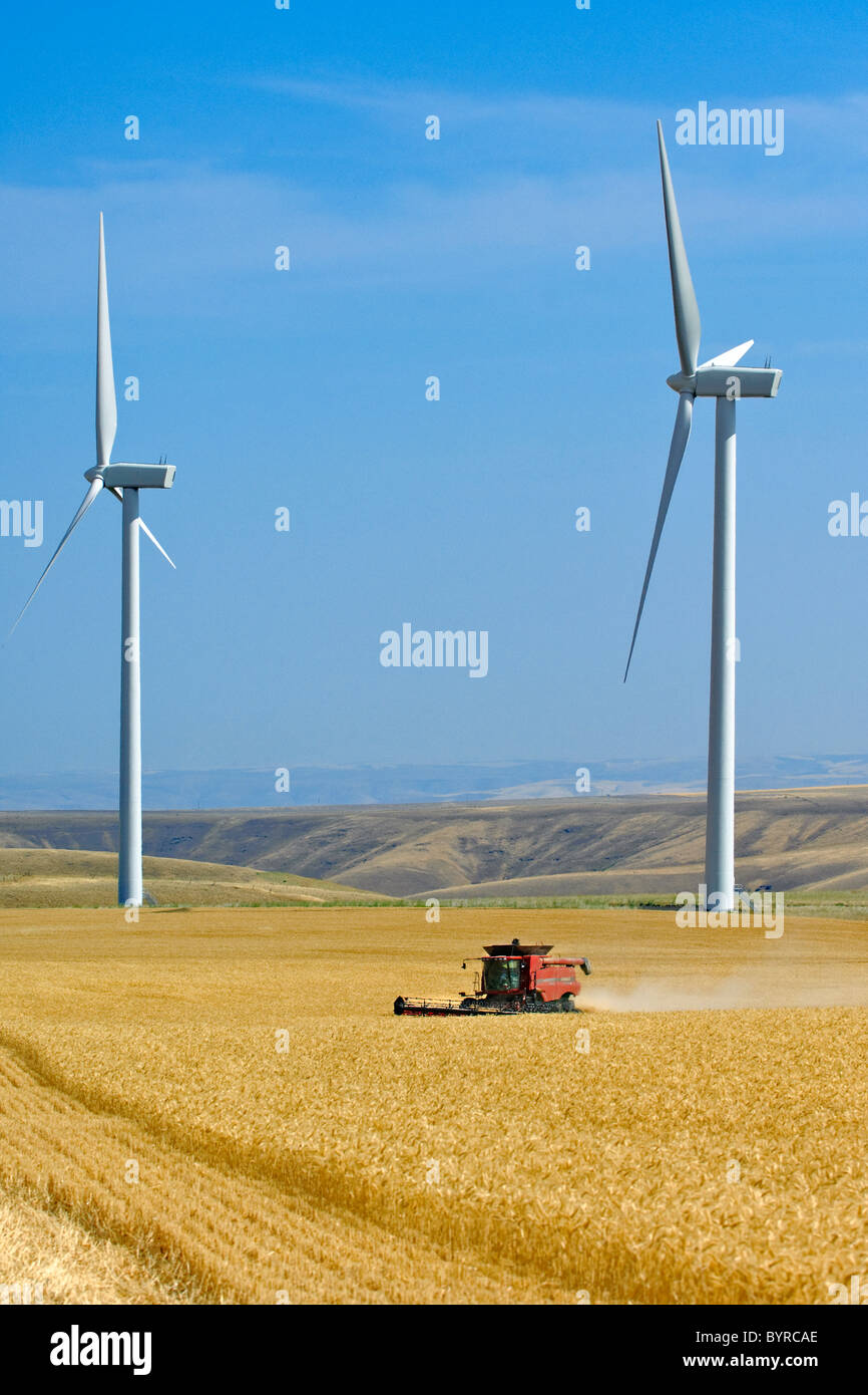 A Case IH combine harvests wheat with two large wind turbines in the background along the perimeter of the field - Stock Image
