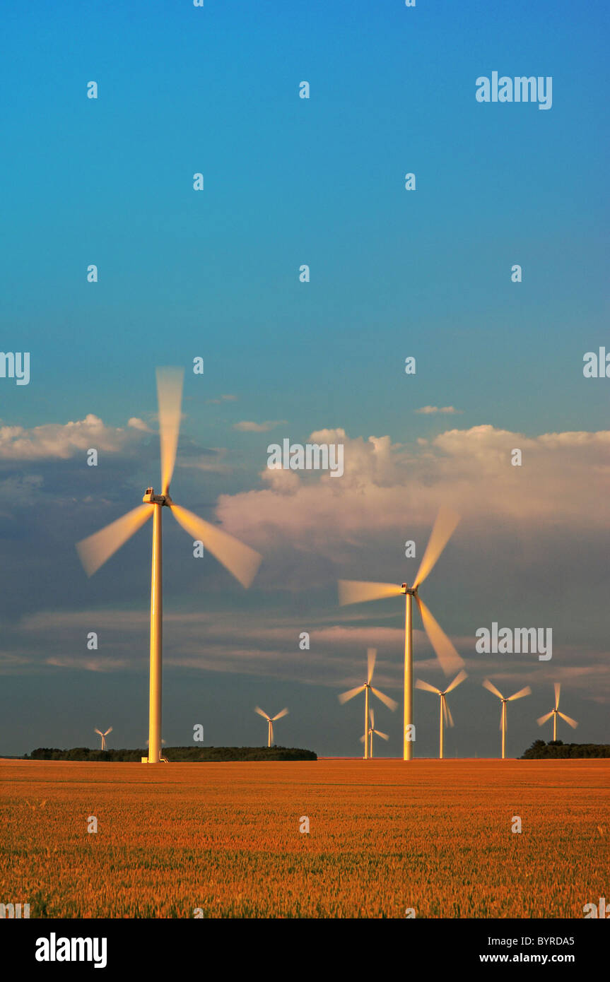 Agriculture - Wind turbines operate in a mature wheat field at sunset / near Somerset, Manitoba, Canada. - Stock Image