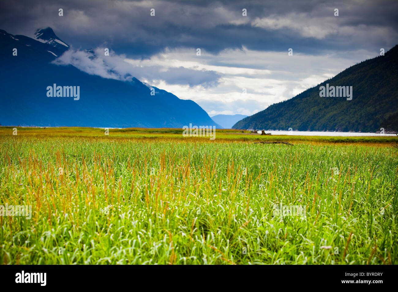 grass in the tidal flats and chilkat mountains with a view of taiya river; skagway, alaska, united states of america - Stock Image
