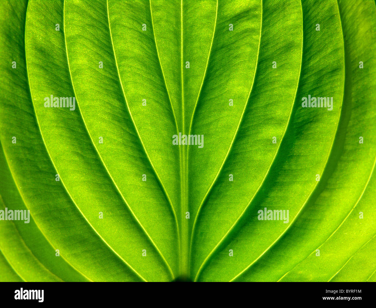 Conceptual image of a leaf - Stock Image