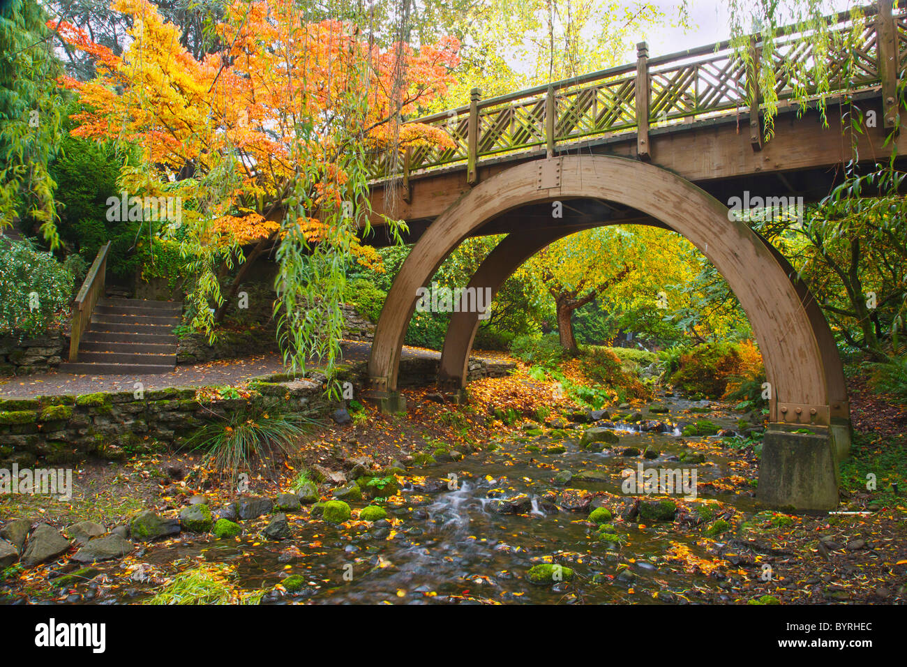Ordinaire Autumn Colors In Crystal Springs Rhododendron Gardens And A Bridge Over A  Stream; Portland, Oregon, United States Of America