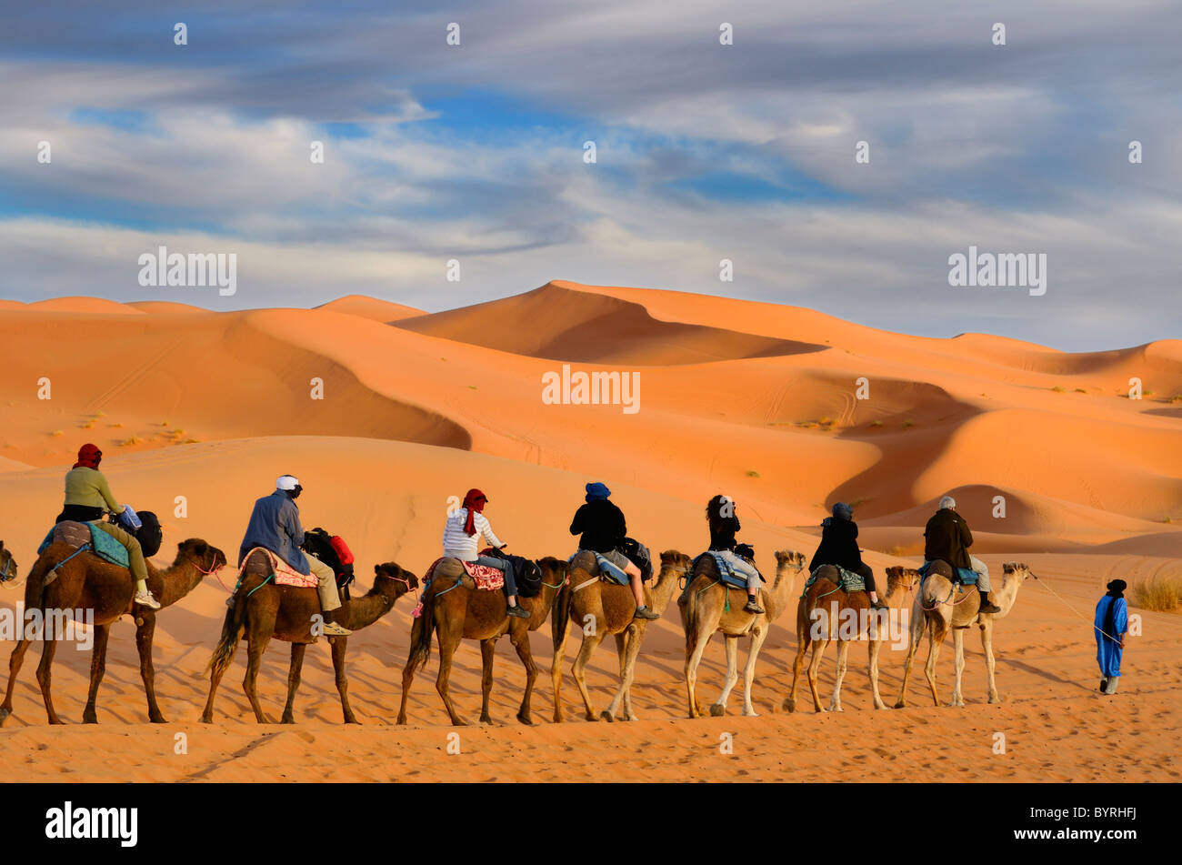 Tuareg Berber man leading a group of tourists on camels through the Erg Chebbi desert with gold sand dunes in Morocco - Stock Image