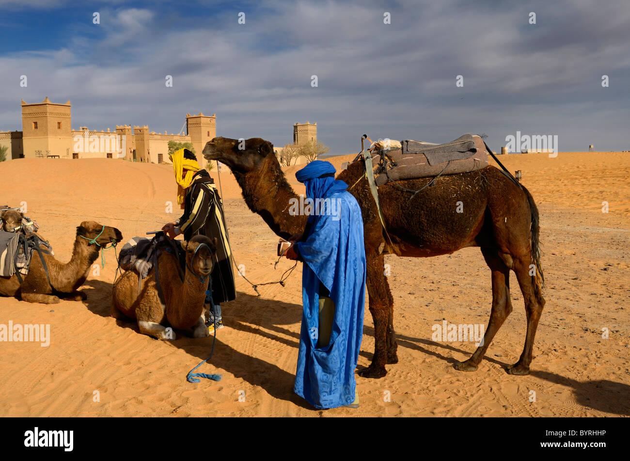 Berber men tending Dromedary camels after a morning ride in Erg Chebbi desert at Auberge du Sud Morocco - Stock Image