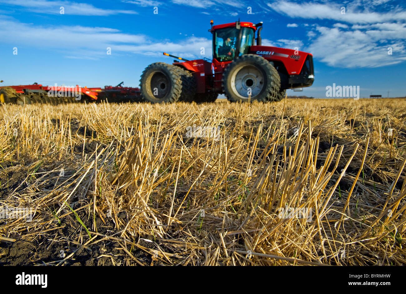 Close-up of wheat stubble with an out of focus tractor pulling cultivating equipment in the background / Manitoba, - Stock Image