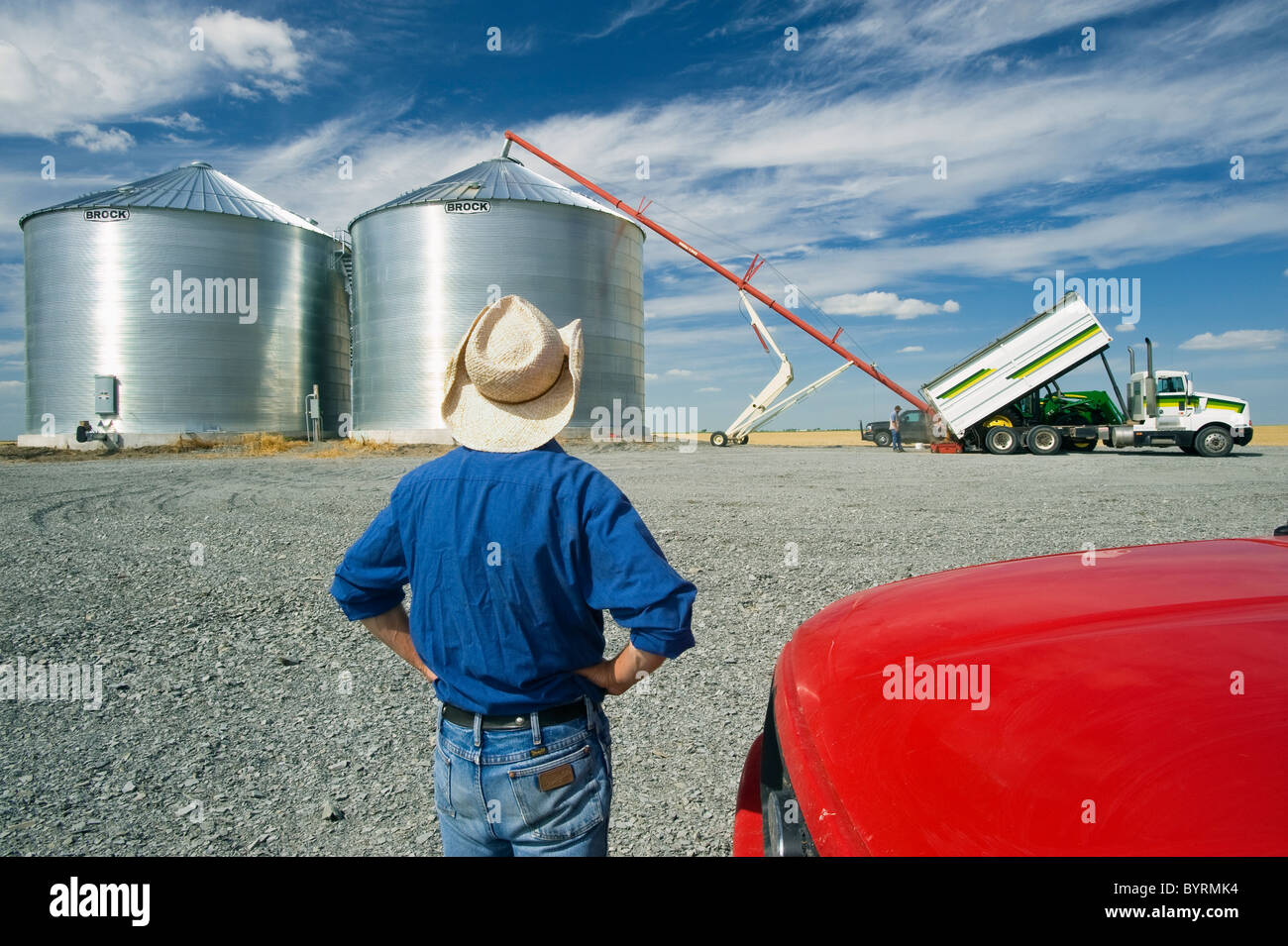 A farmer watches as his newly constructed grain bins are filled with newly harvested winter wheat / near Kane, Manitoba, - Stock Image