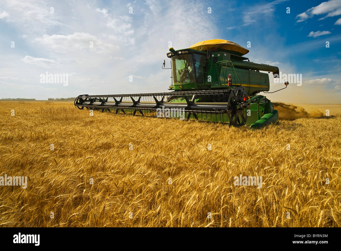 Agriculture - A John Deere combine harvests mature winter wheat in late afternoon light / near Kane, Manitoba, Canada. - Stock Image