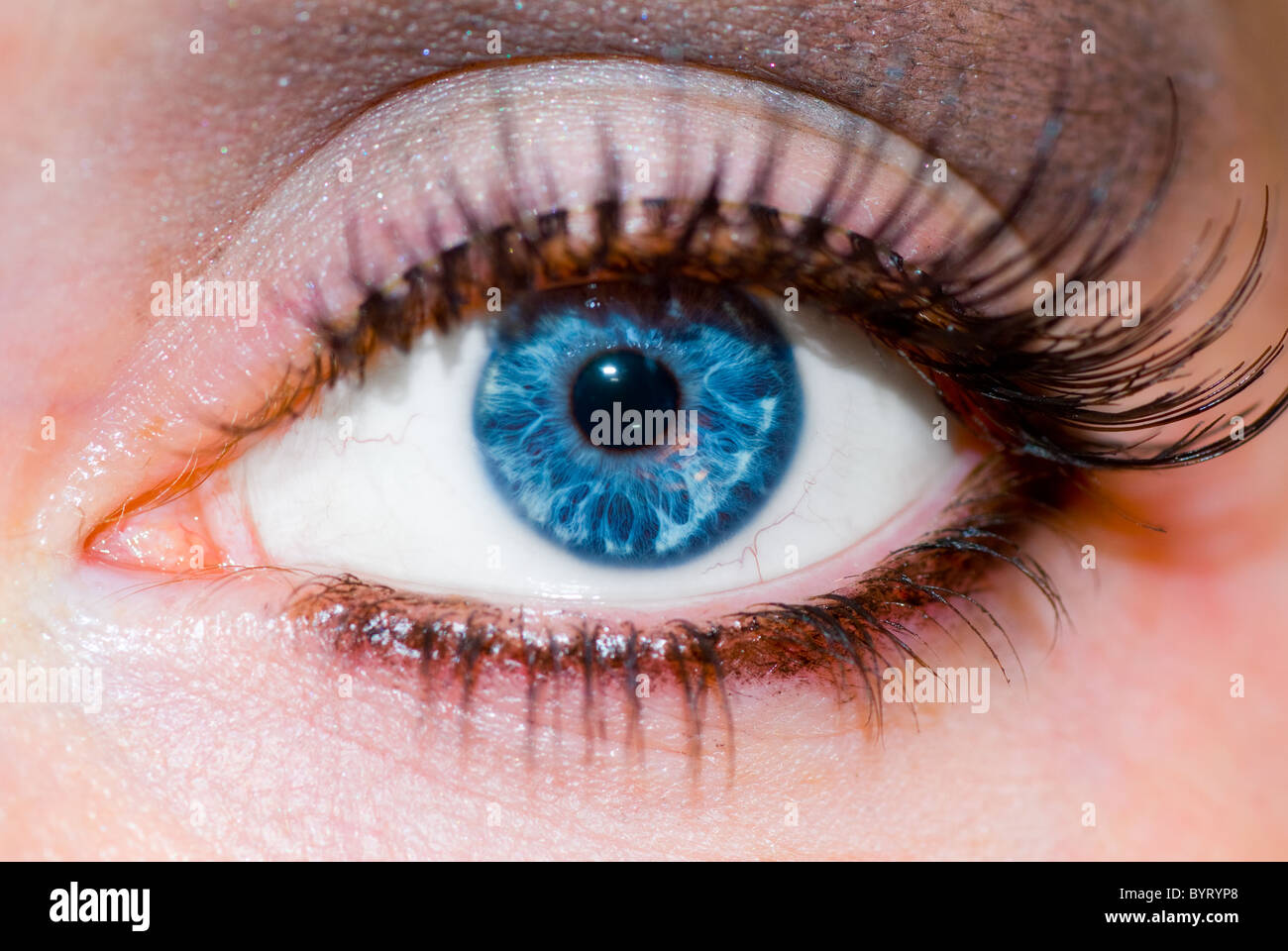470dd4b9e80 Close up of a White European womans blue eye with false eyelashes and makeup .