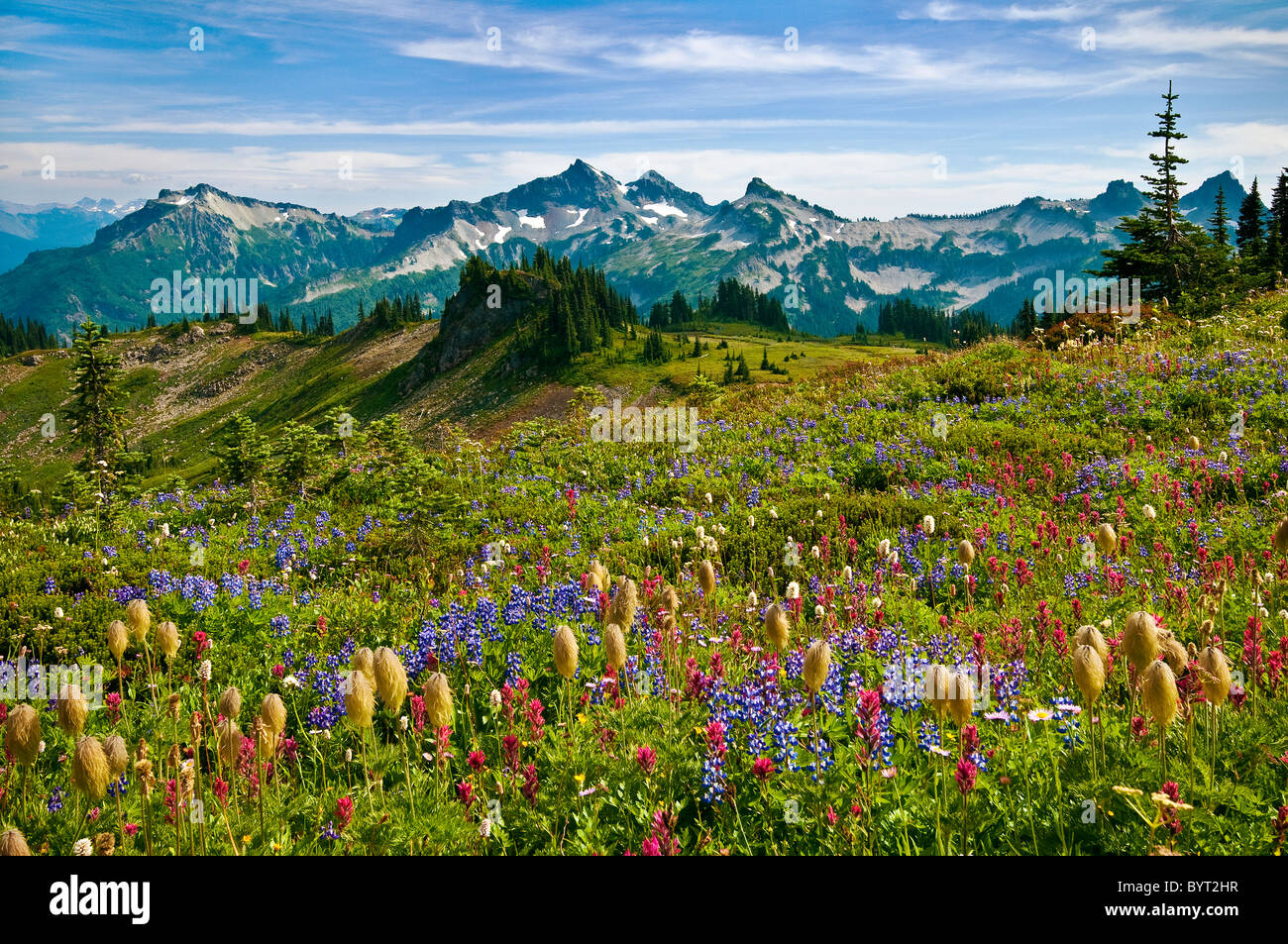 Wildflowers in meadow and view to Tatoosh Range from Skyline Trail in Paradise area; Mount Rainier National Park, - Stock Image