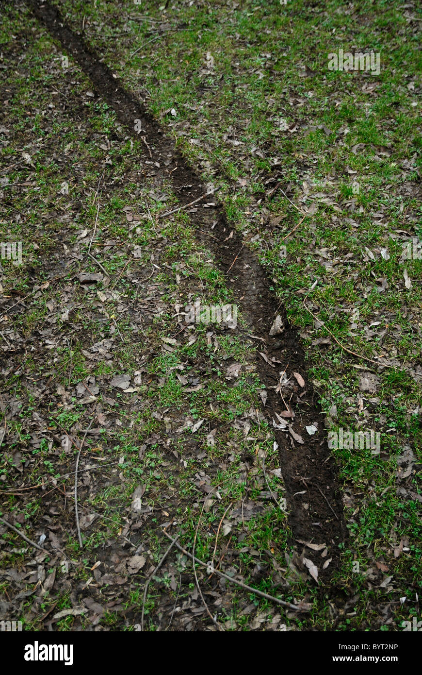 Track left by illegal green lane motorcycling on greenbelt land in Northamptonshire, 6th February, 2011. - Stock Image