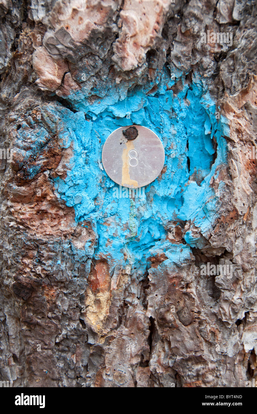 The number 8 stamped on a metal disk nailed to a tree trunk. - Stock Image
