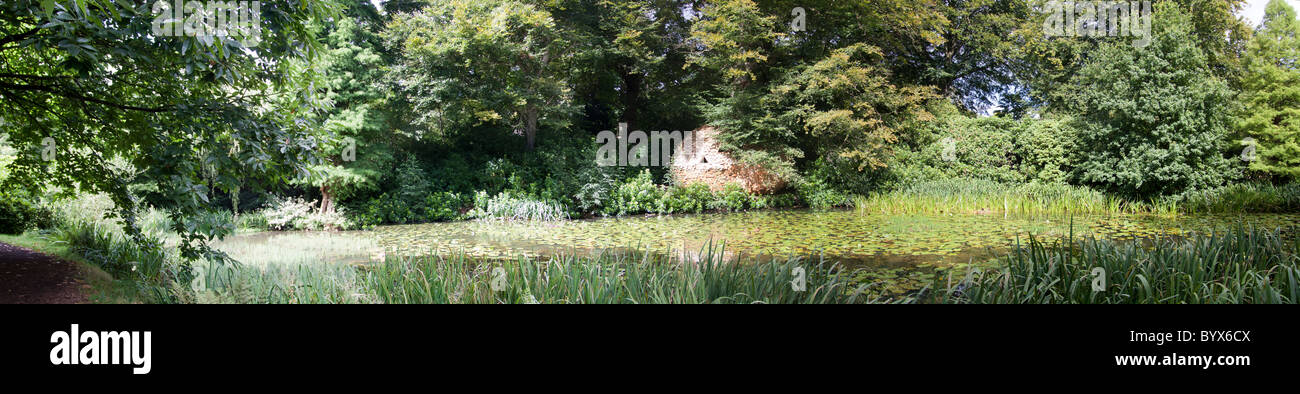 A Panorama of Pond life in Cheshire. - Stock Image