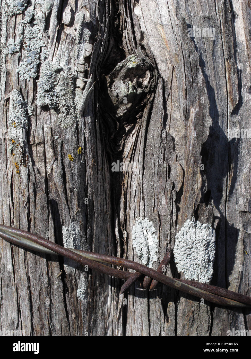 Weathered fence post with barb wire - Stock Image