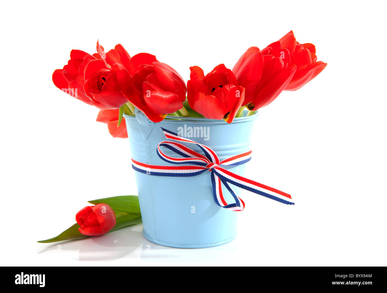 Red white blue flowers flag stock photos red white blue flowers blue bucket with red dutch tulips over white background stock image mightylinksfo