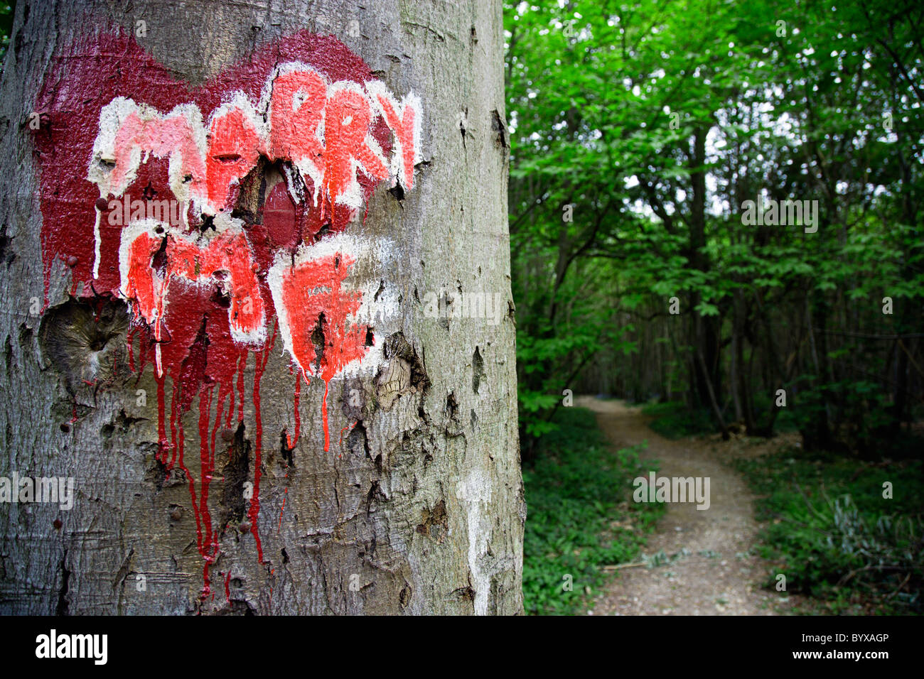 ENGLAND West Sussex Chichester Red Valentine heart painted on trunk of a tree in a forest with the words Marry Me - Stock Image
