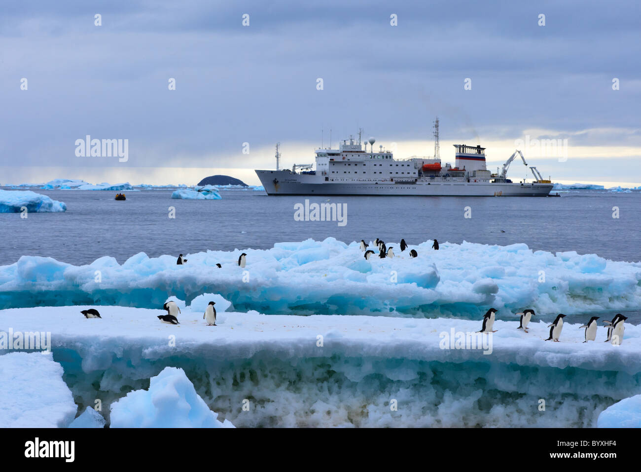 View of tourist ship from Paulet Island with Adelie Penguins in the foreground, Antarctic Peninsula - Stock Image