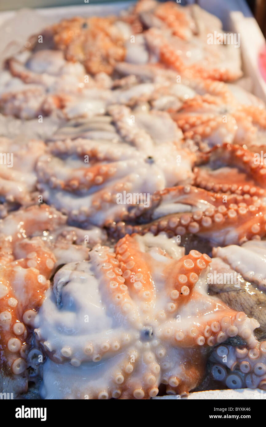 Octopi displayed for sale - Stock Image