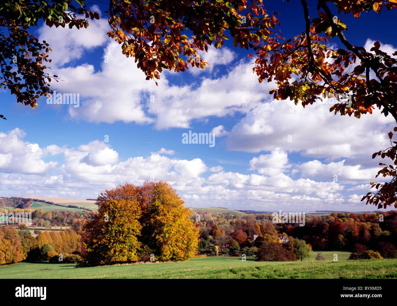 Beech trees at Boyton in the Wylye Valley, Wiltshire, England. Stock Photo