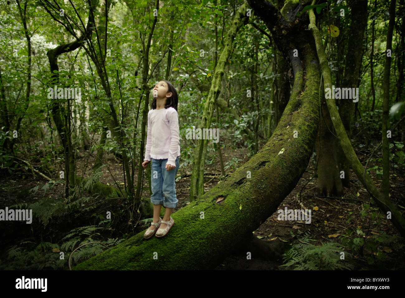 Girl stands on tree trunk and looks up into forest canopy, New Zealand. - Stock Image