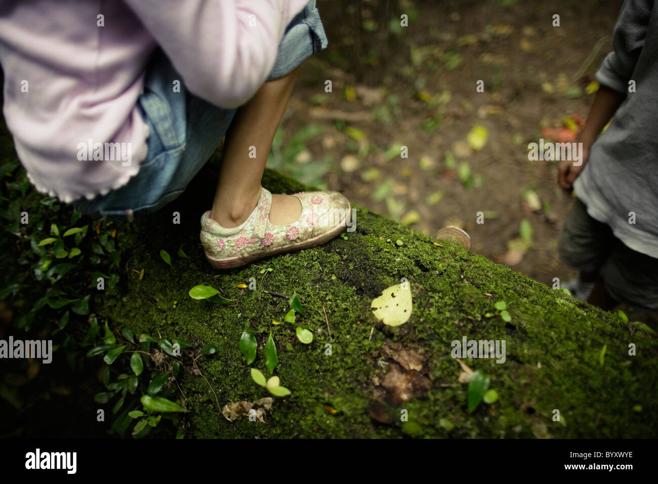 Girl crouches on tree trunk and talks to her brother. Native forest, New Zealand. - Stock Image