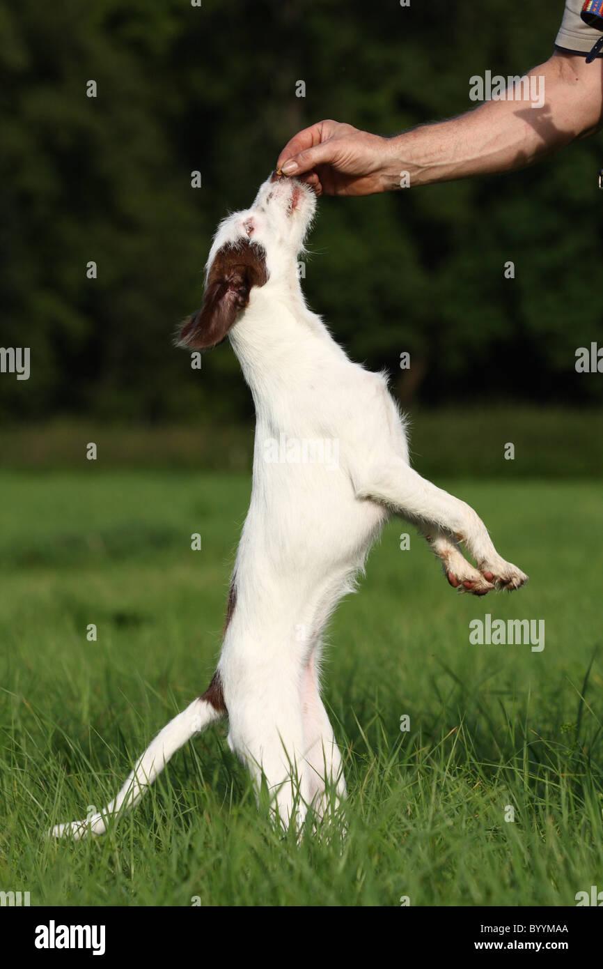 dog gets treat - Stock Image