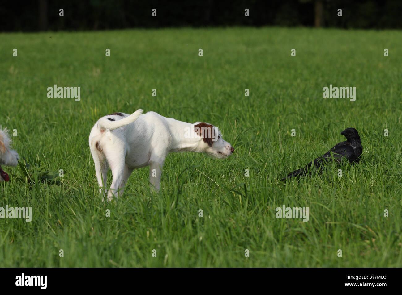 dog and bird - Stock Image