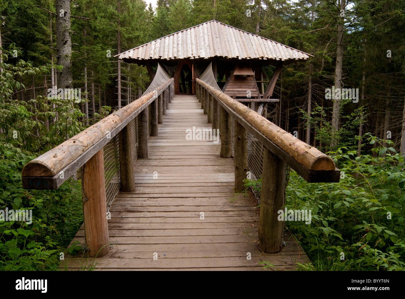 Topic hut at Falkenstein Wilderness Camp, Bavarian Forest National Park, Bavaria, Germany. - Stock Image