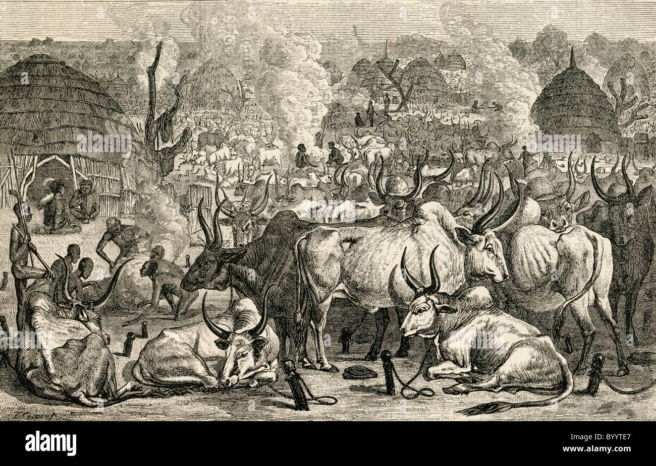 A Dinka cattle park, Southern Sudan, Africa in the 19th century. - Stock Image