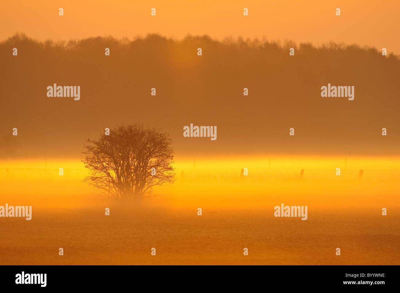 Morning Mist, dreamy landscape - Stock Image