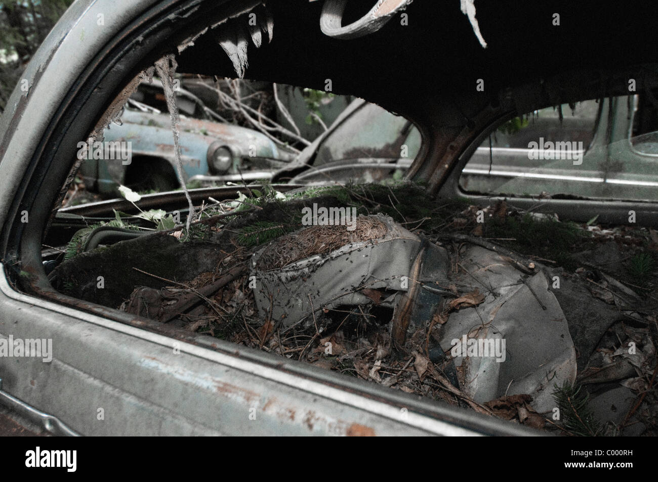 Ants In Car >> Ants In The Rotten Interior Of A Wrecked Car At The Oldtimer