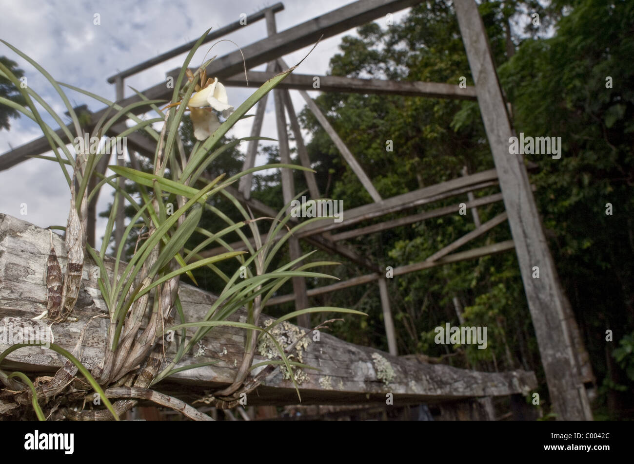 Beautiful plant life in the Amazon region of Ecuador. - Stock Image