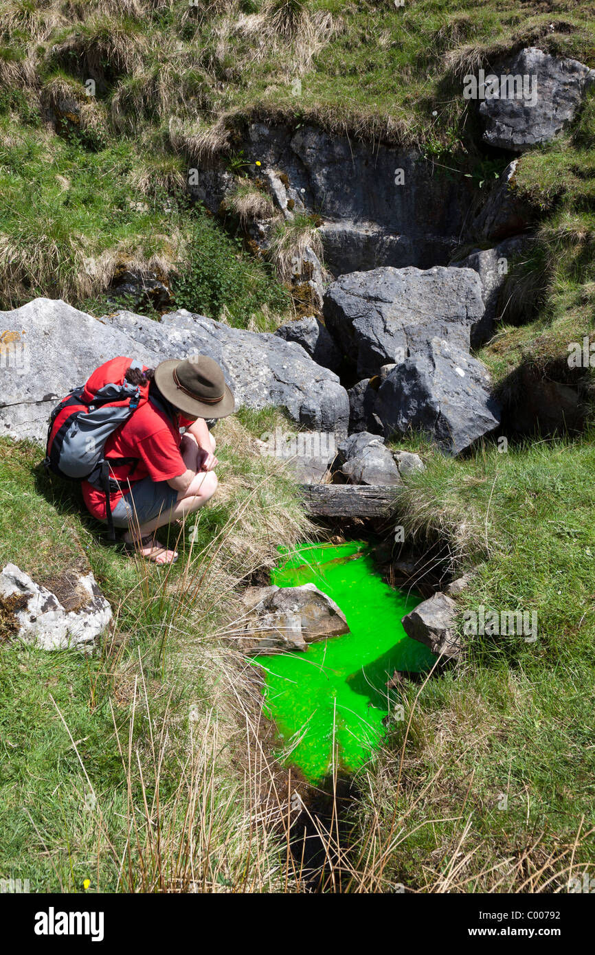 Dye trace experiment inserting fluorescein dye at Plunge Hole Buxton Derbyshire England UK - Stock Image