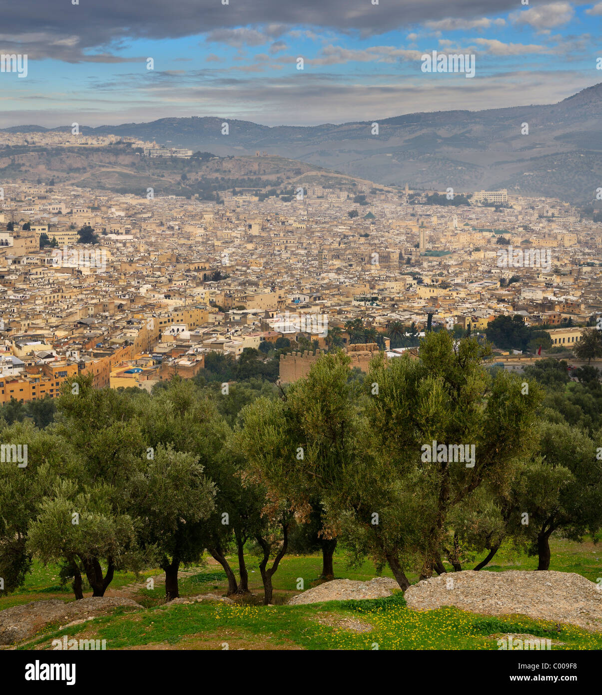 Olive trees on South hill at Borj Sud with view of Fes el Bali Medina Morocco on hazy morning - Stock Image