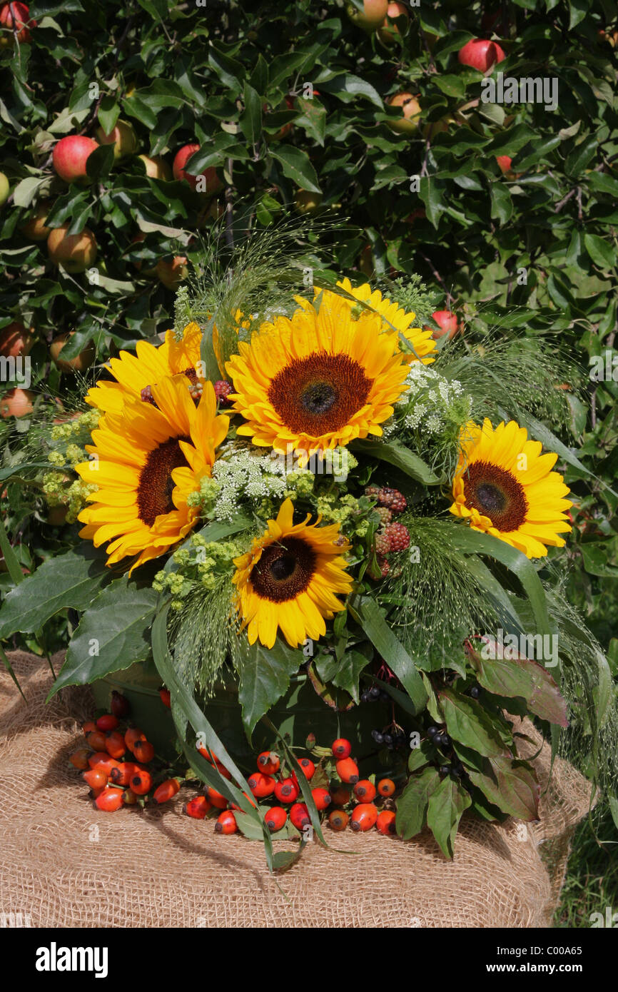 Herbstliches Stilleben, Sonnenblumen, Kuerbisse, Hagebutten, Autumn harvest, Still life, Sunflower, Pumpins, Rose Stock Photo