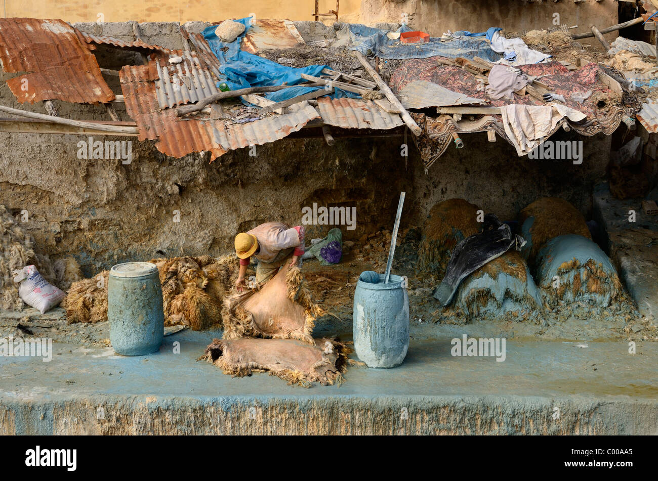 Fes leather tannery worker under decrepit roof painting raw hides with toxic blue chromium by Wadi Fes river Chouara - Stock Image