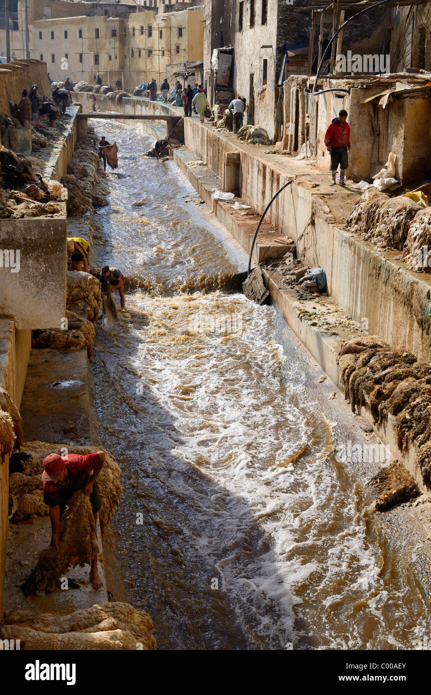 Busy Fes tannery after Eid al Adha with workers washing pelts in the Fes wadi river Chouara Quarter Fez Morocco - Stock Image