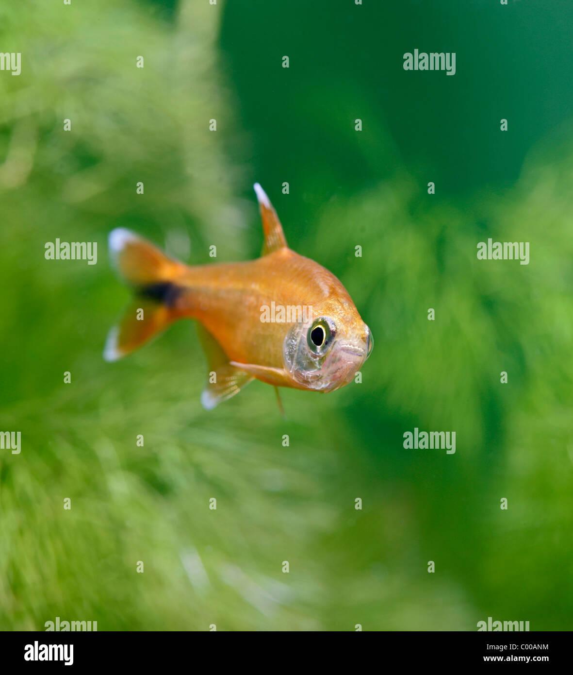 Tropical Freshwater Aquarium Stock Photos & Tropical Freshwater ...