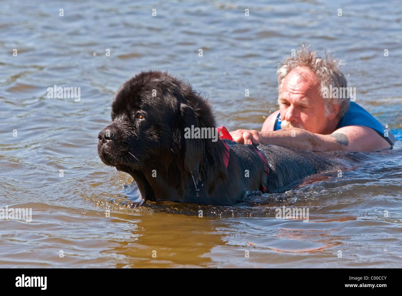 Dog Training Essex