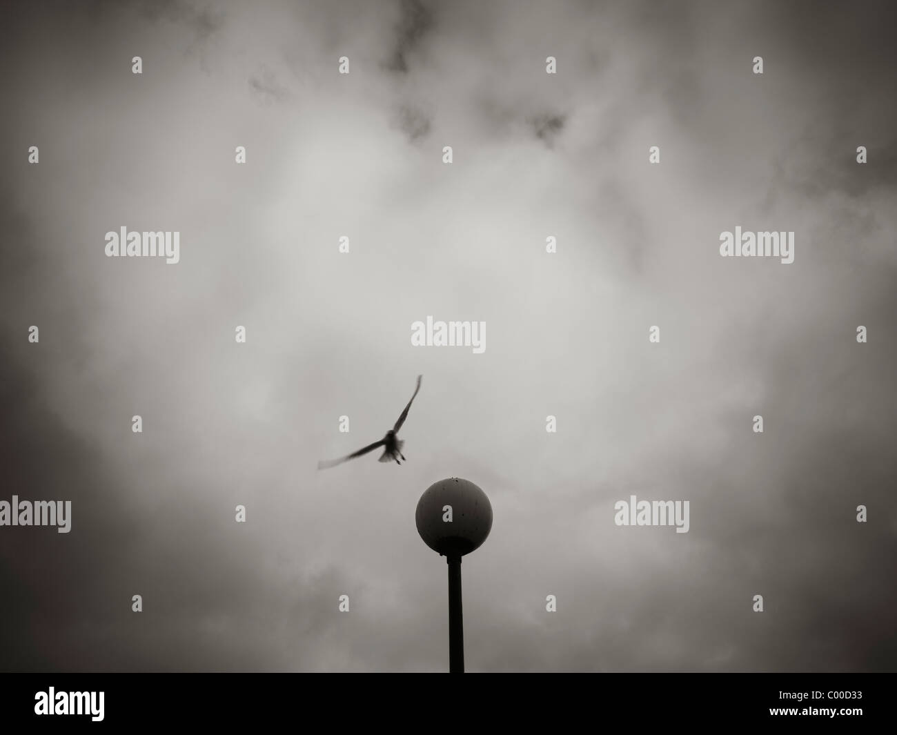 Seagull landing on lampost, Salford Quays, Manchester, with moody sky in black and white - Stock Image