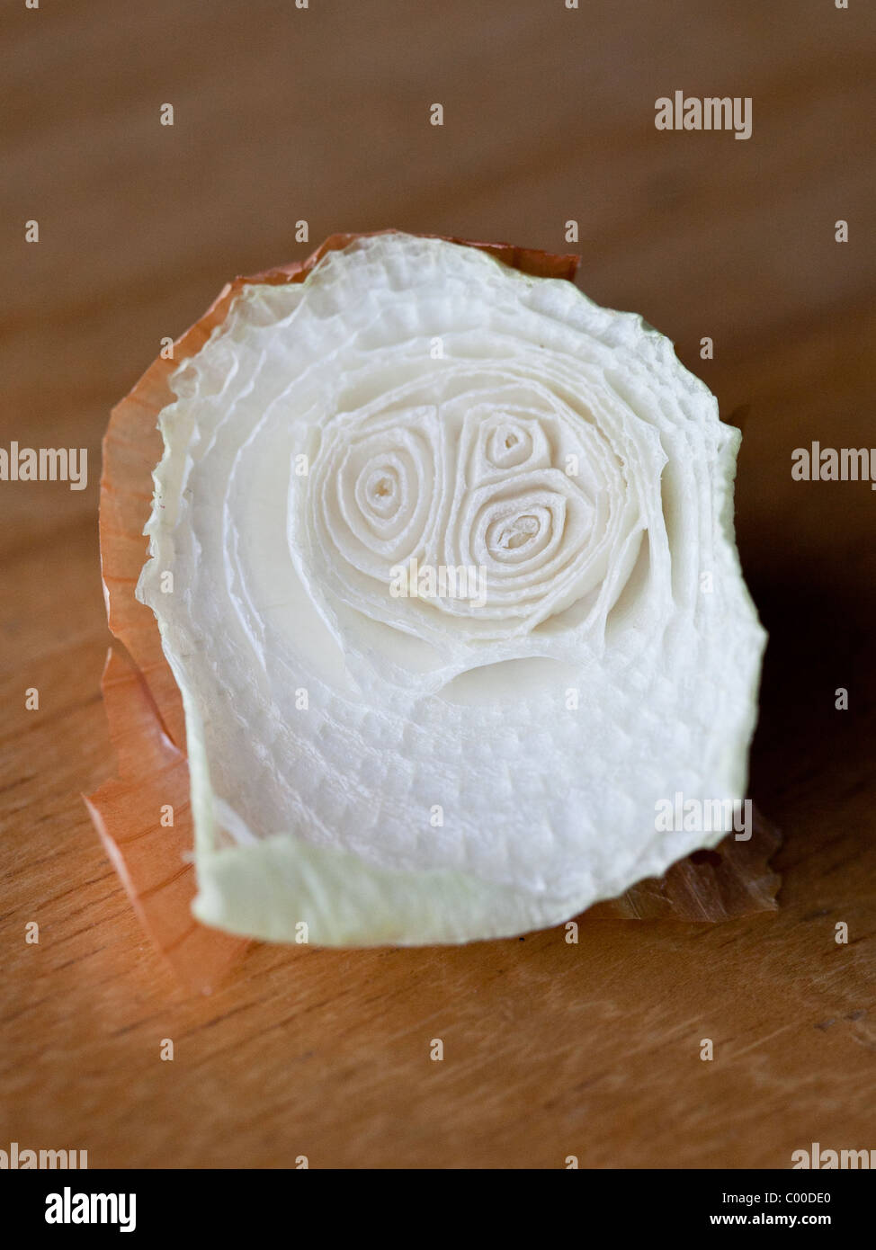 A leftover Onion top dries on a wooden table - Stock Image