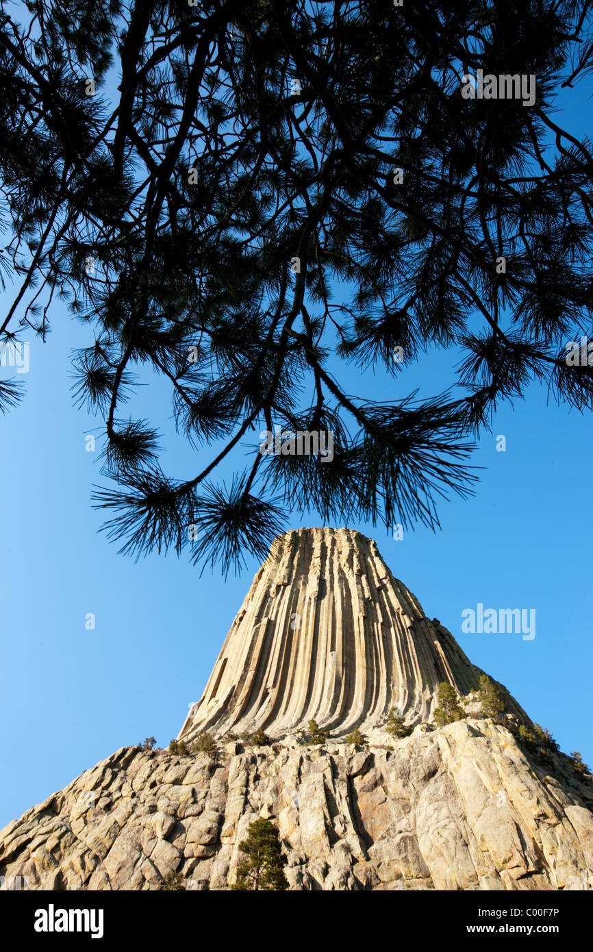 USA, Wyoming, Devils Tower National Monument, Devils Tower is a 1267 foot tall monolithic igneous intrusion in the - Stock Image