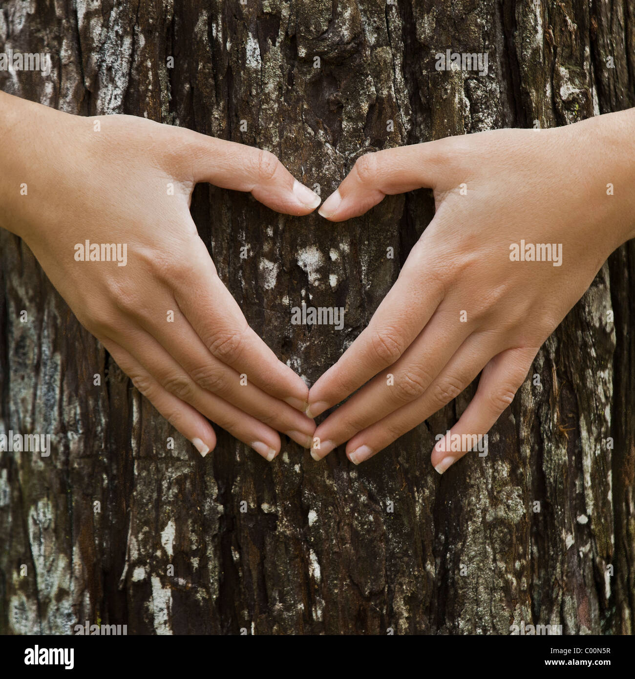 Female hands making an heart shape on a trunk of a tree. Great ecology concept - Stock Image