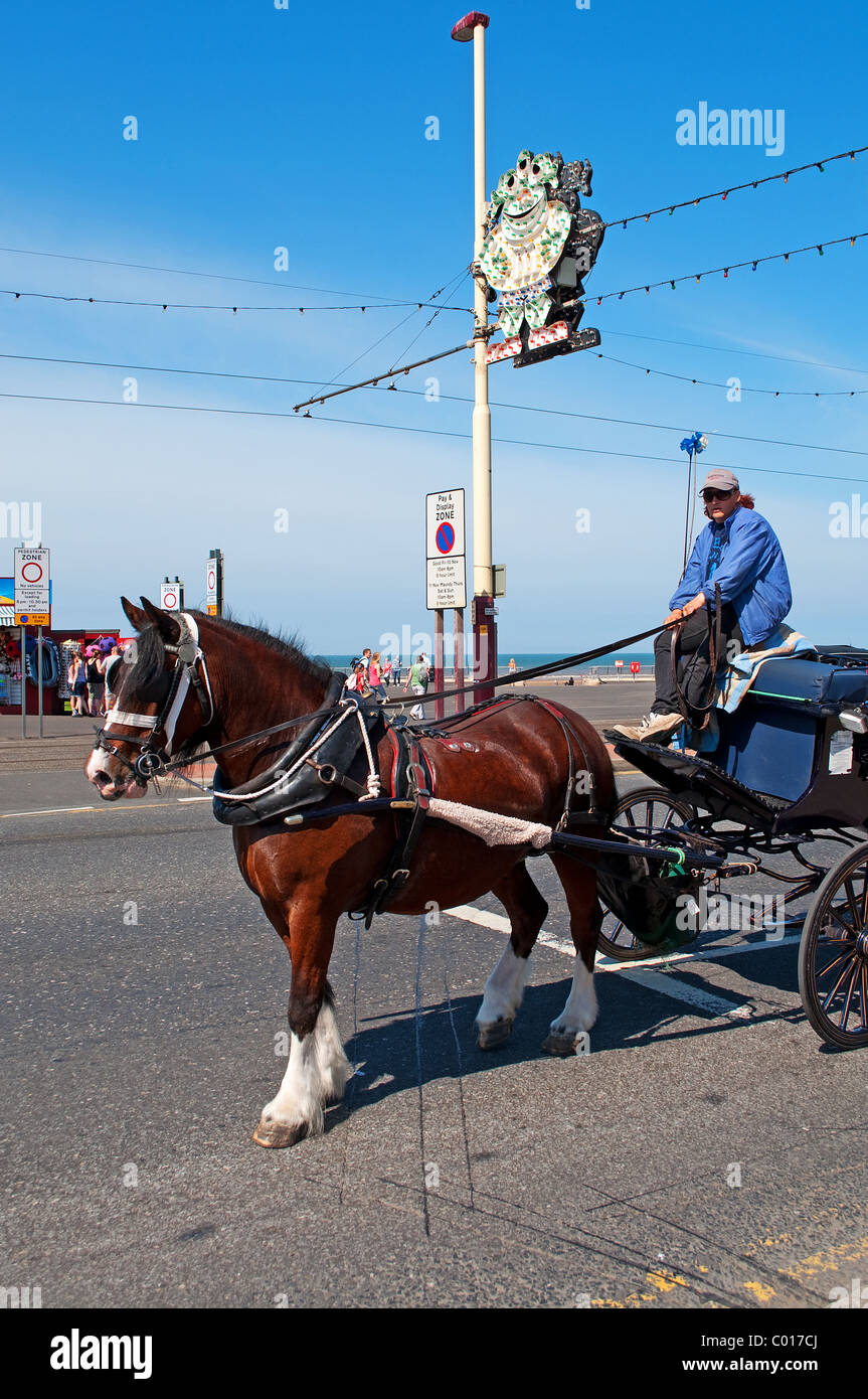 a horse and cart for hire on the ' golden mile '  at Blackpool, England - Stock Image