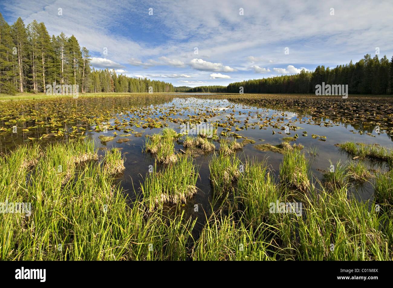 Swan Lake, Colter Bay, Grand Teton National Park, Wyoming, USA, North America Stock Photo