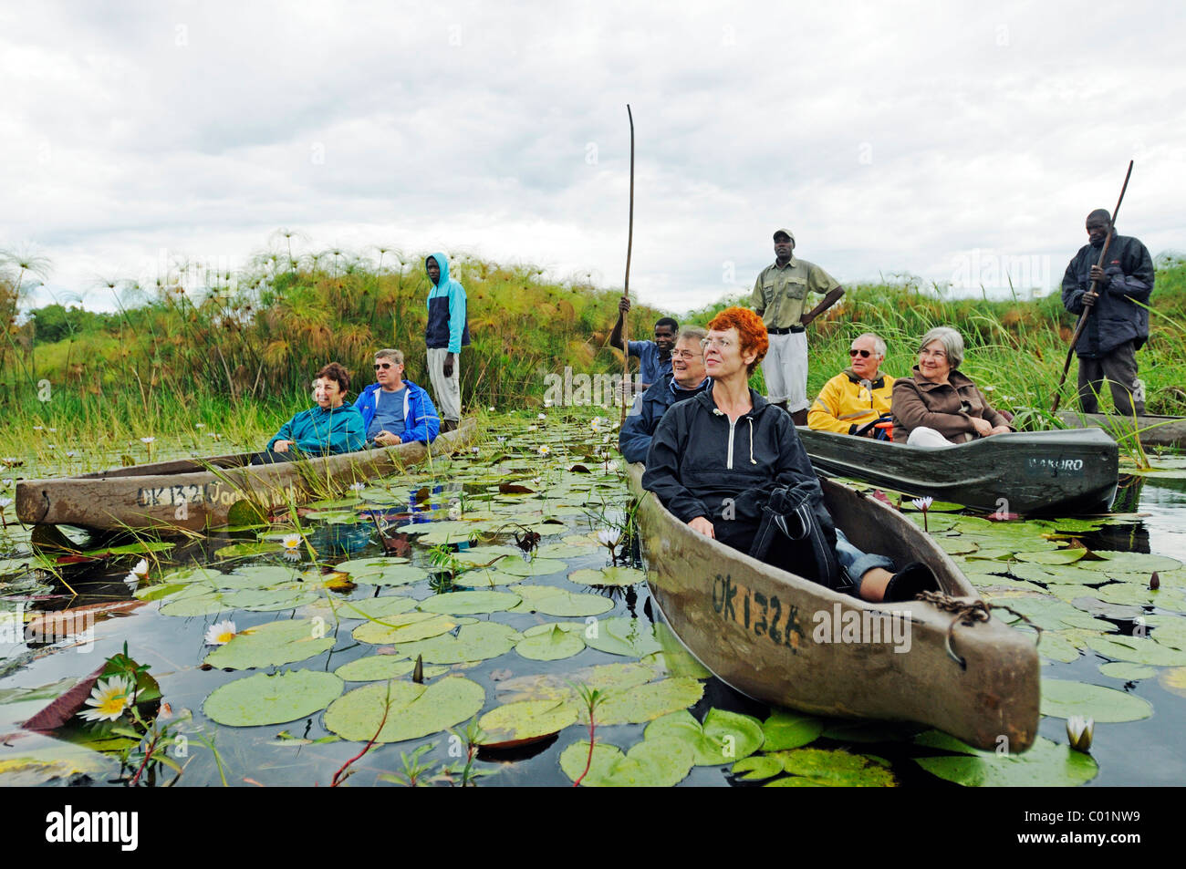 Guides and boatmen with poles in mokoro or makoro canoes, tourists in the back of the boats, Okavango Delta, Botswana, - Stock Image