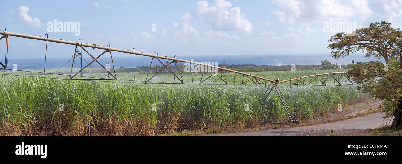 Panoramic view of sugarcane field being irrigated in Petite Riviere, Mauritius, Africa - Stock Image