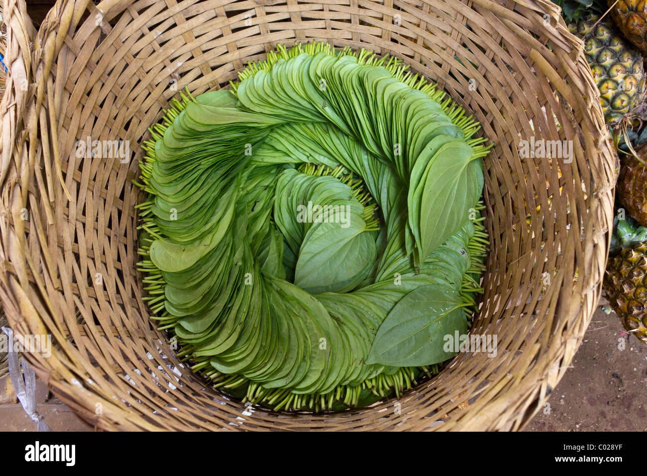 betel leaves in basket, daily market, New Bagan, Burma Myanmar - Stock Image