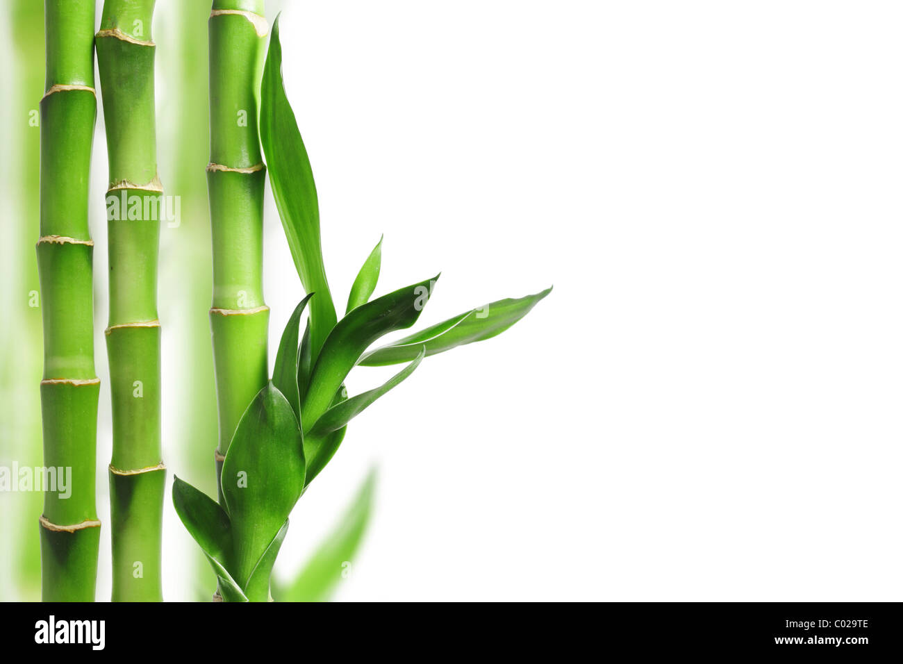 Green bamboo border with copy space - Stock Image