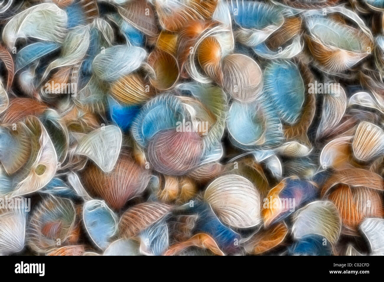 Texture, sea shells, filtered fractally - Stock Image