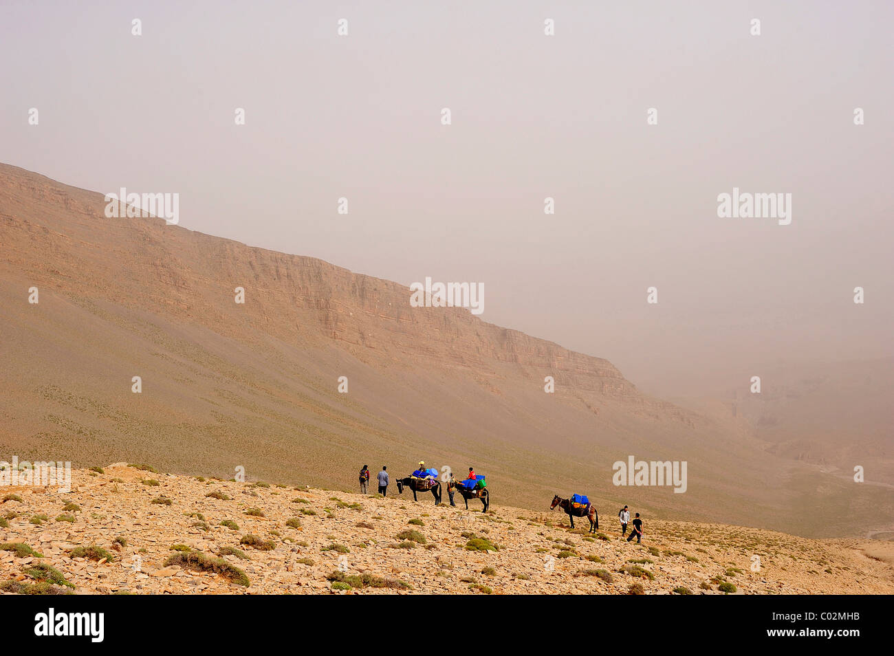 Travellers travelling with mules on a trekking tour in the High Atlas Mountains, Ait Bouguemez, High Atlas, Morocco, - Stock Image